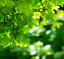 green-leaves-square2